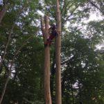 Abattage d'arbres - Lbo Services