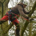 Elagage d'arbres par Lbo Services