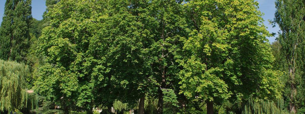 Abattage d'un arbre -Arbres remarquables - Lbo Services