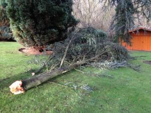 Abattage arbre - LBO SERVICES