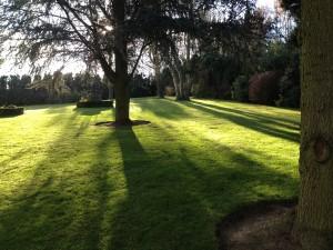 Entretien de jardin en avril 7- LBO SERVICES